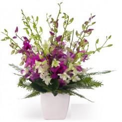 aranjament  orhidee dendrobium