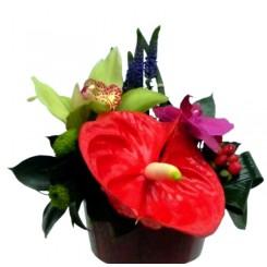 aranjamente corporate cu orhidee