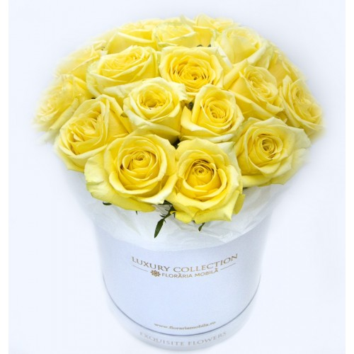 Trandafiri in Cutie Shining Energy